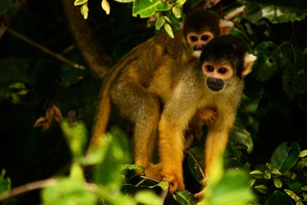 El Curichi es un reservorio valioso de vida silvestre. Foto: Eduardo Franco Berton