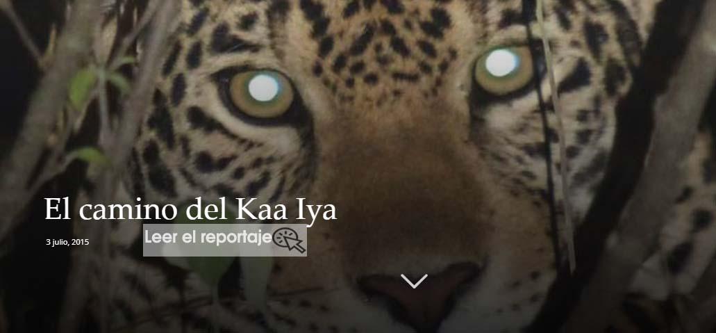 El monitoreo del jaguar se realizó en la frontera entre Perú, Ecuador y Colombia. Foto: WWF Perú.
