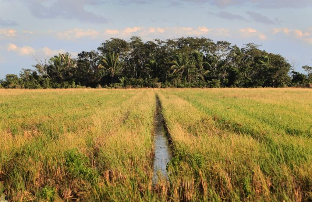 0 El Curichi y cultivos de arroz ©Daniel Alarcón