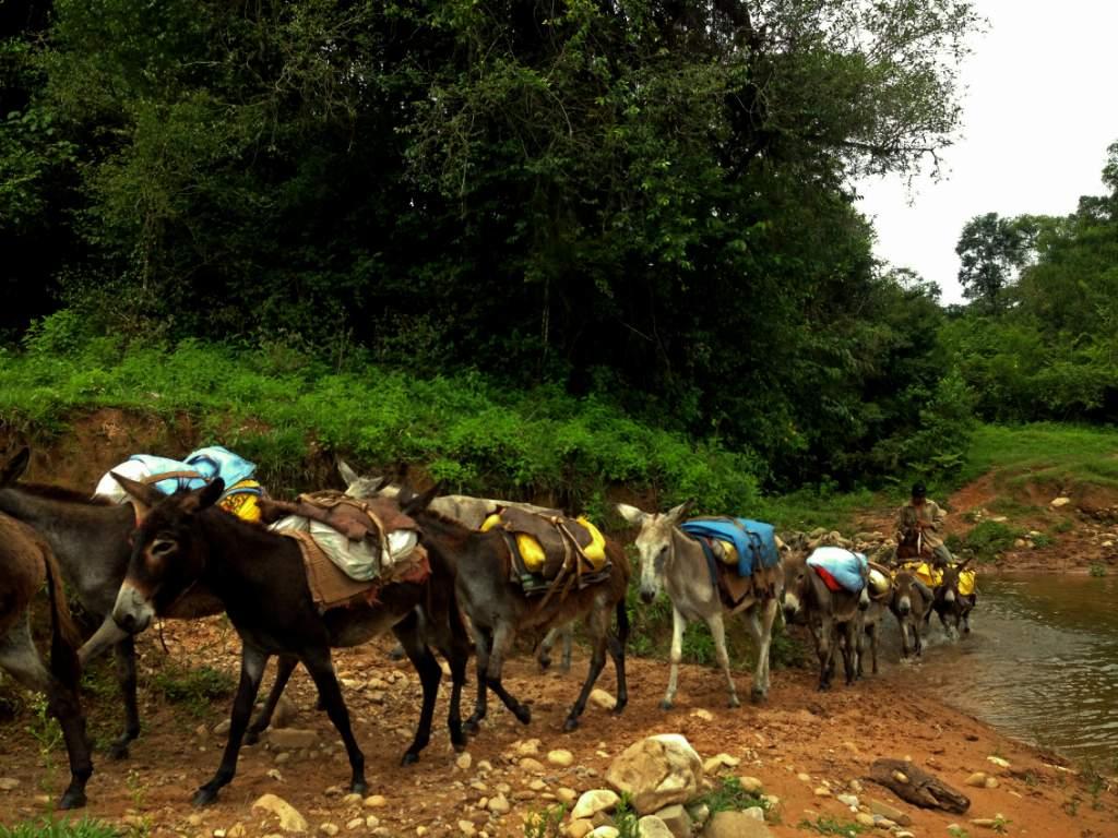 Las mulas y burros son los vehículos de Tariquía