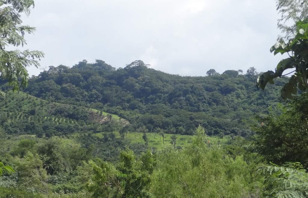 bosque ga (14)