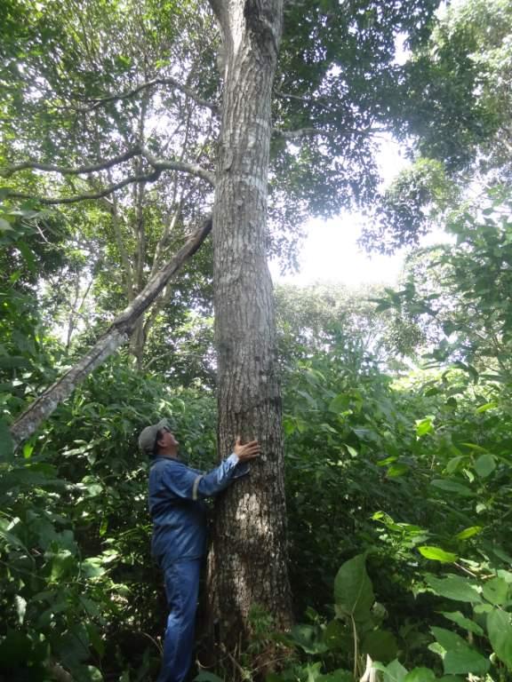 bosque ga (8)