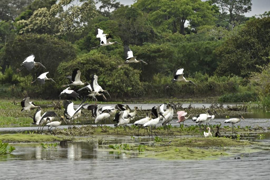 Image4-Adriano_Gambarini-WWF_Living_Amazon_Initiative-HI