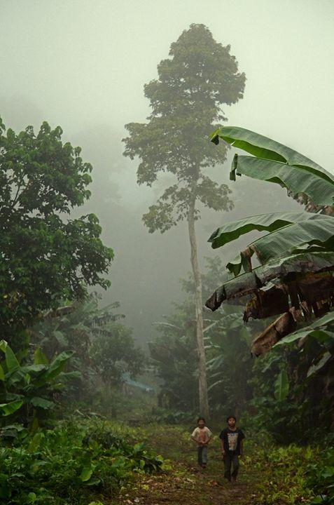La selva es nuestra casa nos dijeron estos niños indígenas Tsimanes.