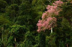 Parque Madidi rumbo a ser el más biodiverso del mundo