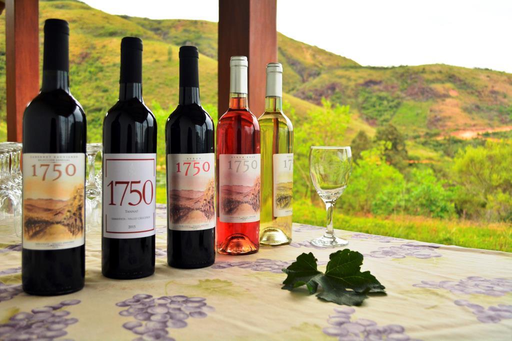 Actualmente Vinos 1750 cuenta cinco variedad: los tintos Cabernet Sauvignon, Syrah y Tannat; y los blancos Syrah Rosé y Torrontés. Foto: © Cecilia Requena Gallo