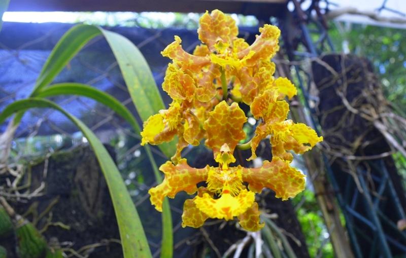 Más de 200 especies de orquídeas nativas son cuidadas y conservadas en este paraíso. Foto: © Huascar Bustillos