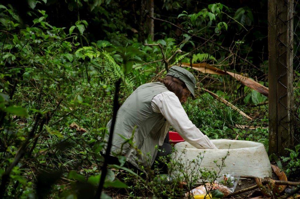 Victoria limpiando las dependencias de los osos.
