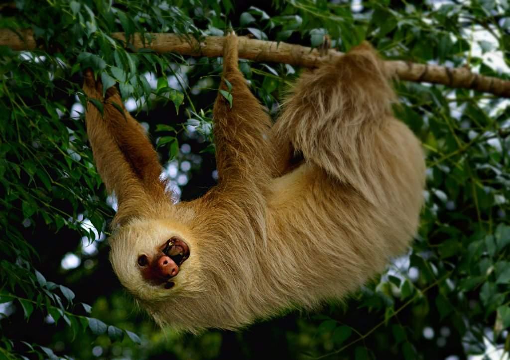 Conozca las graves consecuencias que sufre un animal silvestre en cautiverio