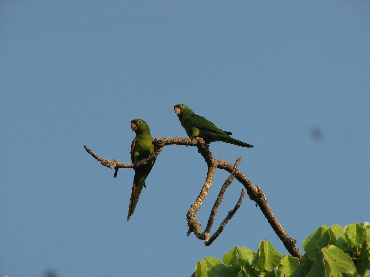 Foto: © Fundación Conservación Loros Bolivia