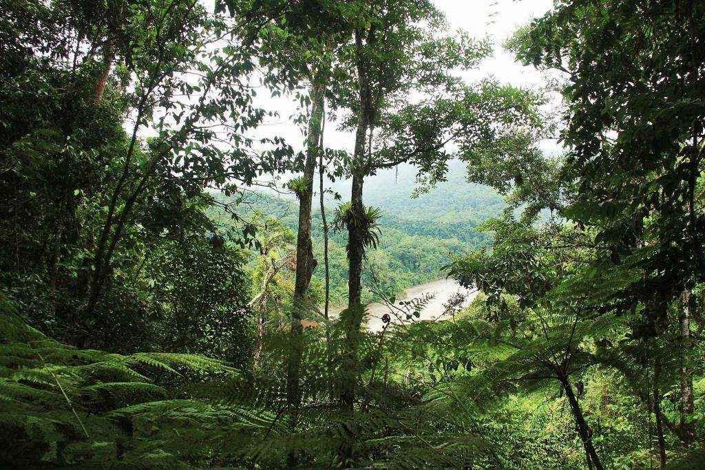 Reserva de la Biósfera y Territorio Indígena Originario Campesino Pilón Lajas, es otras de las áreas protegidas que se vería afectada por las carreteras Charazani – Cobija y Caranavi – Guayaramerín. Foto: © Hugo Santa Cruz