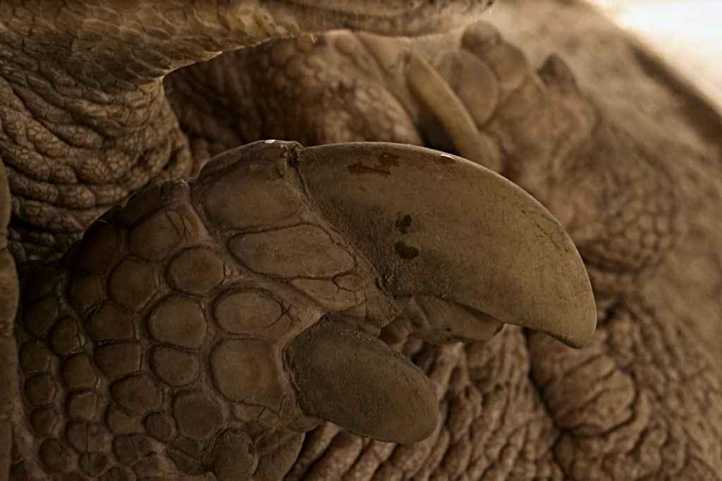 La mayor de sus uñas mide unos 25 centímetros.