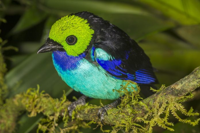 Científicos estiman que la cantidad de especies dentro del parque puede llegar a 11 500. Foto: WCS.