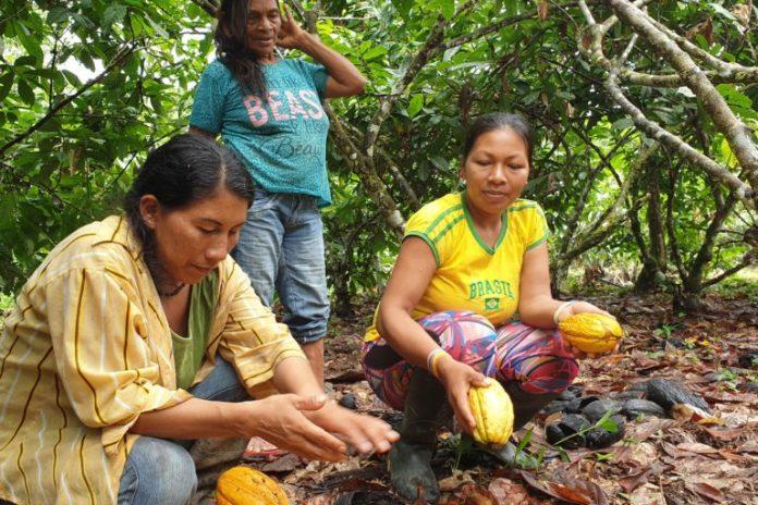 La comunidad campesina de Yabroco está empeñada en conservar el sancoyo, un fruto silvestre tradicional. Foto: Mónica Suárez Galindo / PNUD Perú – PPD.