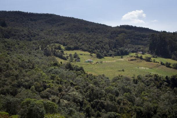 Deforestación superó las 2 millones de hectáreas en la Amazonía de Bolivia, Colombia, Ecuador y Perú (La región 03.08.21)